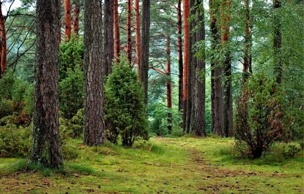 skanderborg-skov